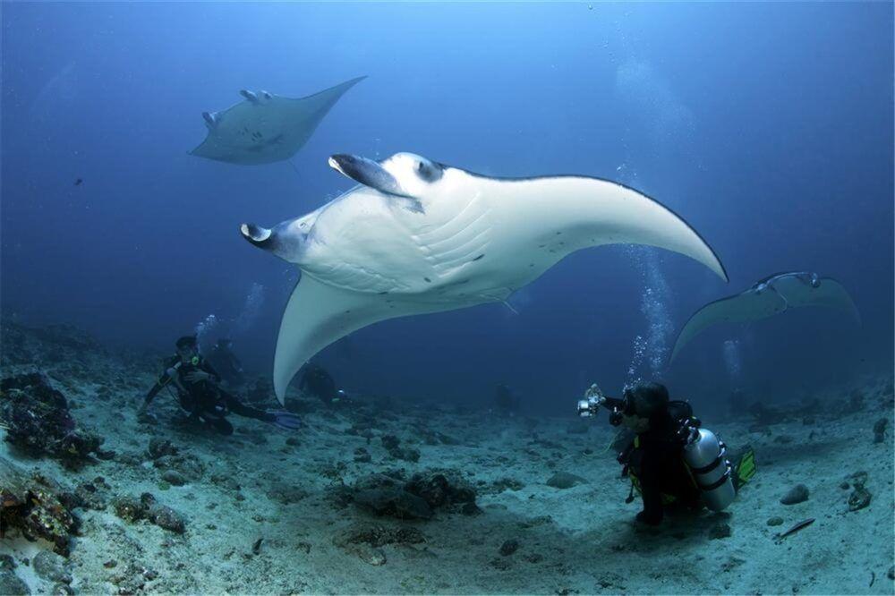 Mejores lugares de submarinismo en Maldivas